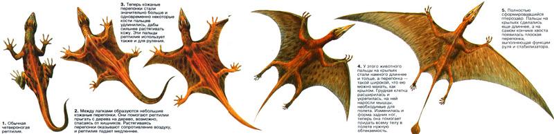 История птерозавров - наглядный пример эволюции В мезозойскую эру одна из групп древних рептилий приобрела...