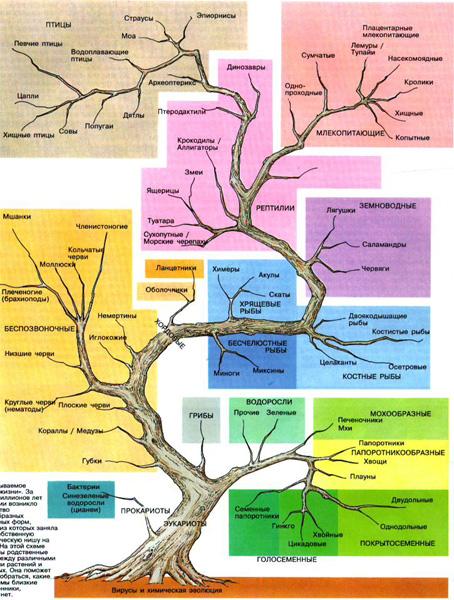 Фото 26.  Презентации по биологии.  Классификация организмов.ppt.  Всего различают пять царств живой природы...