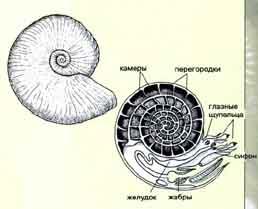 Развитие вселенной, часть 14 5