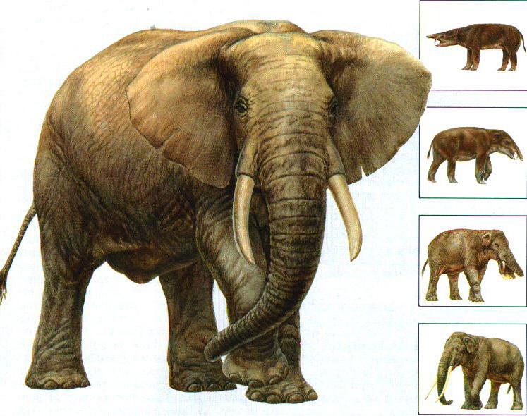 Ныне живущих млекопитающих насчитывают около 4500 видов.