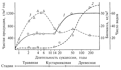 Рис. 18. Изменение чистой продукции (1), биомассы (2) и видового разнообразия (3) дубово-соснового леса (Брукхейвен, штат Нью-Йорк) в ходе сукцессии (Р.Уиттекер, 1980): 1 - чистая продукция увеличивается до стабильного уровня в травяной стадии, затем, поскольку в сообщества внедряются деревья, вновь возрастает до уровня, который может сохраняться в климаксе; 2- биомасса низка в травяных стадиях, но быстро увеличивается при накоплении древесных тканей кустарников и деревьев; климаксовый уровень биомассы, вероятно, может быть достигнут не ранее чем через 400 лет; 3 -видовое разнообразие (число видов на площади 0,3 га) возрастает в последних травяных стадиях, далее снижается в кустарниковых стадиях (14-20 лет), несколько увеличивается в молодом лесу (50 лет) и вновь уменьшается в климаксе (время дано в логарифмическом масштабе, что позволяет расширить ранние и сжать поздние стадии сукцессии)