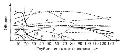 Рис. 19. Пространственный континуум как следствие экологической индивидуальности видов; зависимость обилия видов в арктической тундре от глубины снежного покрова (В.Д.Александрова, 1965): 1 -Potentilla emarginata; 2 - Alopecurus alpinus; 3 - Papaver polare; 4-Draba pohle; 5 - Ranunculus nivalis; 6 - Cerastium bialynickii; 7 - Salix polaris; 8 - Deschampsia brevifolia; 9 - Androsace triflora; 10 - Juncus biglumis; 11 - Phippsia algida; 12 - Ranunculus pygmaeus