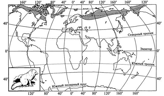 Рис. 35. Циркумполярный ареал песца (В. Г. Гептнер, 1936)