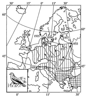 Рис. 39. Расселение кольчатой горлицы в Европе (У.Зедлаг, 1972)