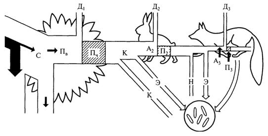 Рис. 2. Поток энергии через три уровня простой кормовой цепи (П.Дювиньо, М.Танг, 1968): С - свет; Пв - валовая продукция; Пч - чистая продукция; П2, П3 - вторичная продукция; Д1-Д3 - потери на дыхание; К - корм; Н - неиспользуемая энергия; А2 - энергия, ассимилированная в зоомассе; А3 - энергия, ассимилированная хищниками; Э - экскреты, отходы