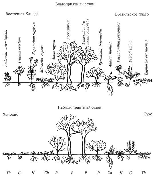 Рис. 11. Жизненные формы К Раункиера (Р Dansereau, 1951) Р -фанерофиты, Сh - хамефиты, Н -гемикриптофиты, G -геофиты, Th- терофиты