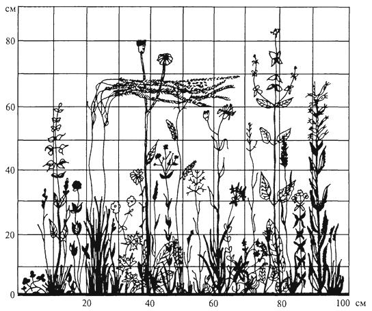 Рис. 12. Вертикальная проекция травостоя остепненного луга в Орловской области (Т. А. Работнов, 1968)