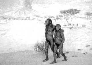 Еще раз о происхождении человека Где возник род человеческий.