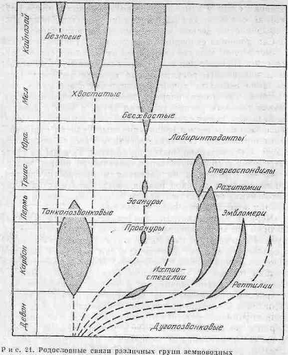 По палеонтологическим данным