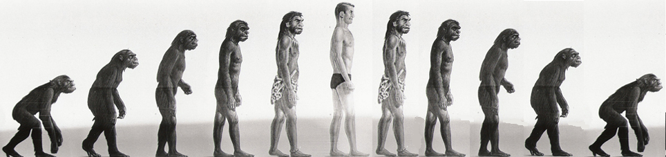 analyzing ardipidicus radumus species in the human evolution