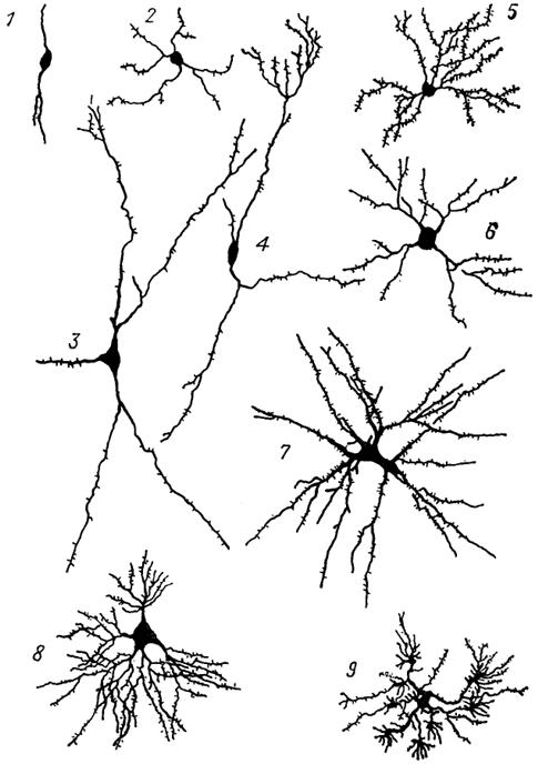 Что такое Нейрон? | Деятельность нервной системы