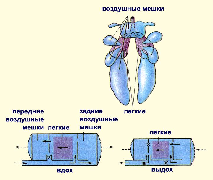 Василий Томсинский. Переходные